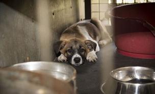 כלבים נטושים (צילום: השירותים הוטרינריים גוש דן, חדשות)