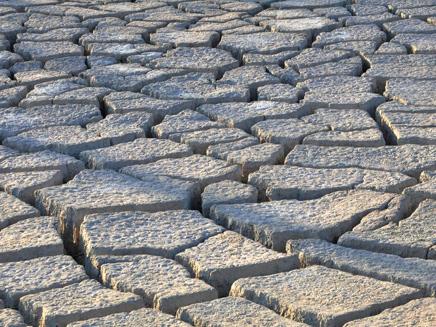 בעקבות הבצורת: מיליונים לחקלאות