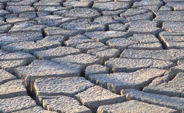 בעקבות הבצורת: מיליונים לחקלאות (צילום: דורית יורדן דותן, חדשות)
