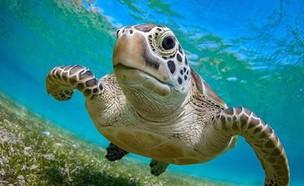 צב ים (צילום: Instagram/turtletrend)