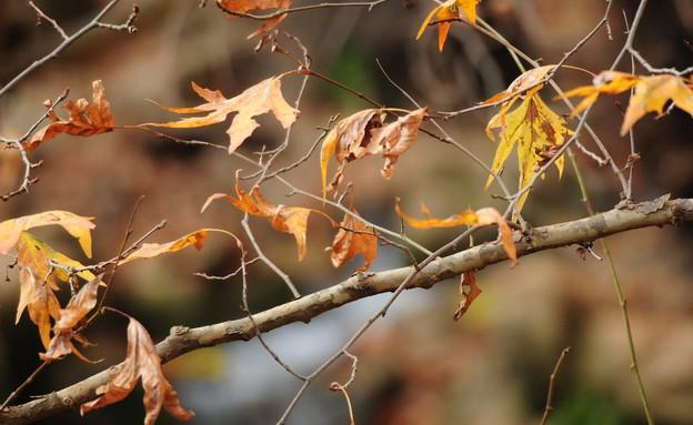 שמורת נחל עמוד (צילום: עפו בכרייה)