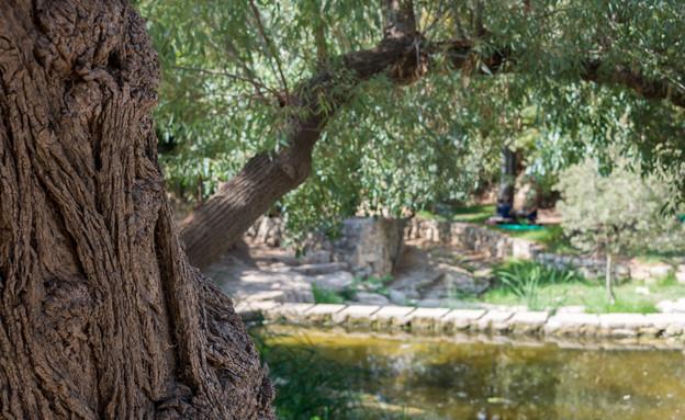 עין חמד (צילום: shutterstock )