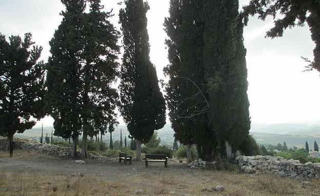 גבעת הברושים (צילום: By Avi1111 dr. avishai teicher)