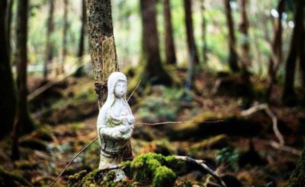 יער אוקיגהרה (צילום: dadoshoeserra, instagram)