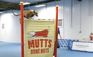 הכלב הבריטי ששבר את השיא העולמי (צילום: GUINNES WORLD RECORDS 2019 OUT NOW, חדשות)
