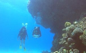 תיעוד: הפלא של מפרץ אילת (צילום: החדשות)