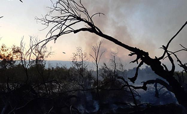 500 דונם נשרפו (צילום: ארז ברוכי רשות הטבע והגנים, חדשות)