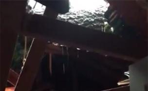 עץ שקרס על בית, הוריקן פלורנס (צילום: מתוך הטוויטר של Shaboom Banana, חדשות)