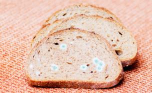לחם עם עובש (צילום: MVolodymyr, shutterstock)