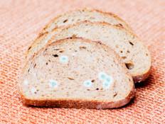 עובש על פרוסת לחם: האם צריך לזרוק את הכיכר?