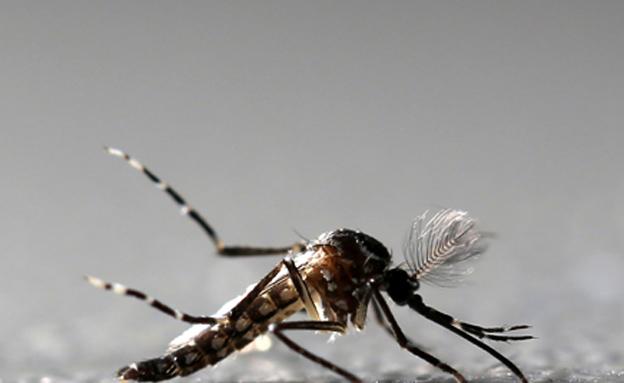 """מועברת ע""""י יתוש, קדחת הנילוס (צילום: רויטרס, חדשות)"""