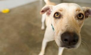 המחקר שלא הפתיע את בעלי הכלבים. צפו בתגובות (צילום: 123RF, חדשות)