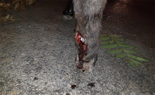 הפצעים על האתון (צילום: תנו לחיות לחיות, חדשות)