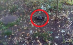 הטיל בחצר בית הספר (צילום: פייסבוק)