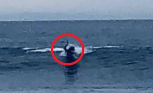 יצור בים (צילום: יוטיוב\MrMBB333)