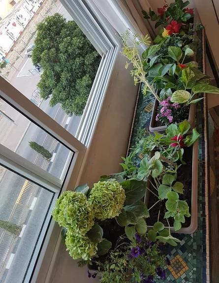הדירה של רוני וידידיה גולדברג סנה-אור (צילום: רוני גולדברג סנה-אור, אלבום פרטי)