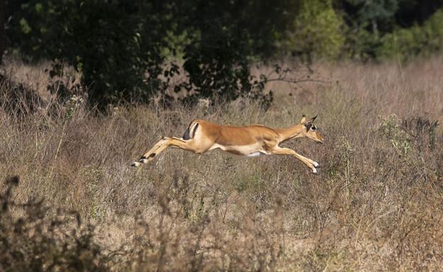זמביה (צילום: איתמר גרינברג)