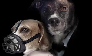 """מתוך """"פוסטרים כלבים"""" (צילום: צילום מסך מתוך האינסטגרם """"פוסטרים כלבים"""")"""