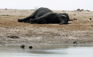 ההשלכות ההרסניות של האדם לטבע (צילום: רויטרס, חדשות)