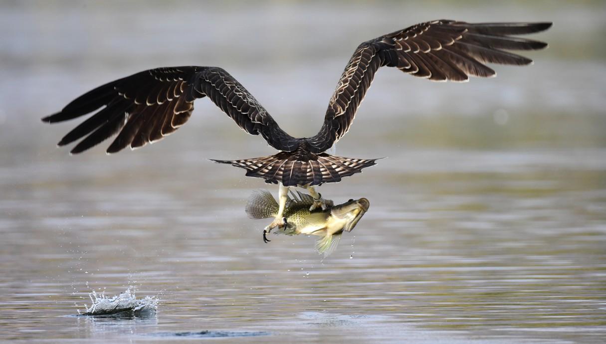 ציפורים ובעלי חיים