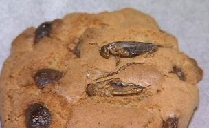 בתפריט: עוגיות ג'וקים וגלידת תולעים (צילום: AP, חדשות)