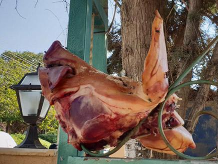 החזיר שהוצב בפתח בית הכנסת
