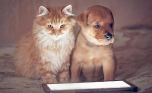 חתול וכלב עם טאבלט (צילום:  Grigorita Ko, ShutterStock)
