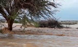 שיטפון בנחל גדרון (צילום: אורן פריטל, רשות שמורות הטבע והגנים, חדשות)