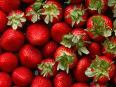 סלסלת תותים - אילוסטרציה (צילום: רויטרס, חדשות)