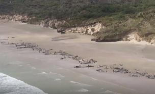 תיעוד אווירי של החוף בניו זילנד (צילום: skynews, חדשות)