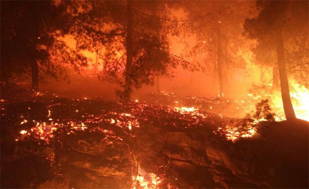 1,700 שרפות ב-58 מוקדים (צילום: איברהים גרייס, חדשות)
