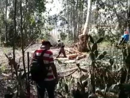 יער אוסישקין כפר סבא
