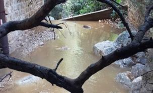 נחל אורן, גן לאומי פארק הכרמל (צילום: דוגי וינר, רשות הטבע והגנים, חדשות)
