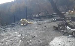 צפו: מדיסון מחכה ליד הבית השרוף (צילום: ABC10, חדשות)