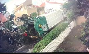 נפצעה מנפילת עץ ותובעת את העירייה (צילום: חדשות)