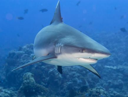 טרגדיה בסיני: ילד נהרג מתקיפת כריש באתר צלילה