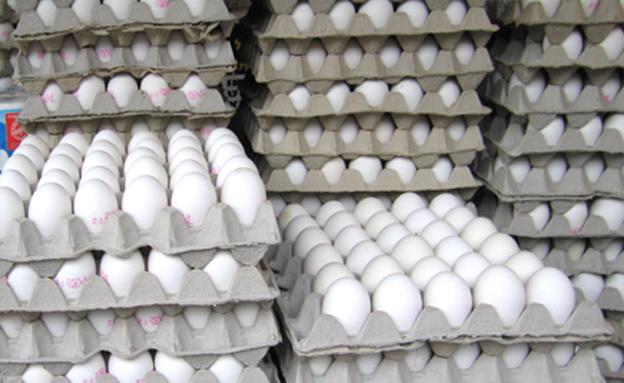 דווקא בירידה. ביצים (צילום: חדשות 2)