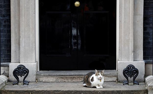 בלונדון סוער, לארי שומר על יציבות (צילום: רויטרס, חדשות)