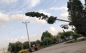 עץ שקרס בקיבוץ אשדות יעקב מאוחד (צילום: דוברות המשטרה, חדשות)