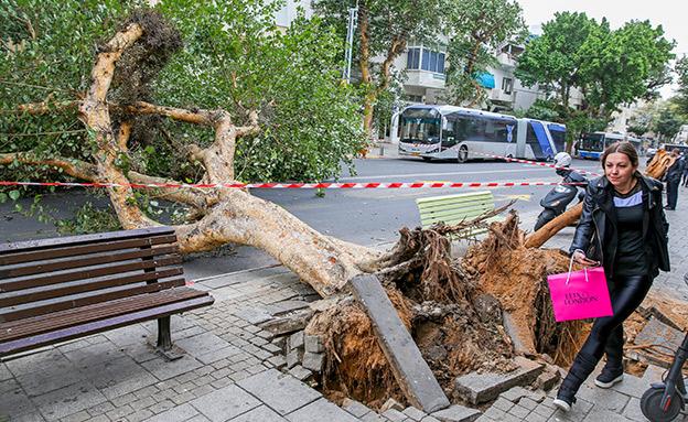 עץ שקרס בגלל הסופה (צילום: פלאש 90, חדשות)