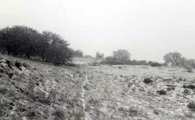 שלג בשמורת טבע בנטל (צילום: אוריה ואזנה רשות הטבע והגנים, חדשות)