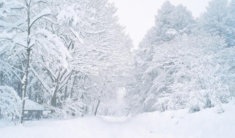 אאומורי (צילום: Katsuaki Shoda / EyeEm, getty images)