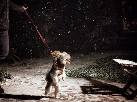 שלג בנווה דניאל, גוש עציון