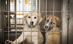 מאות כלבים הורדמו בבית המחסה (צילום: השירותים הוטרינריים גוש דן, חדשות)