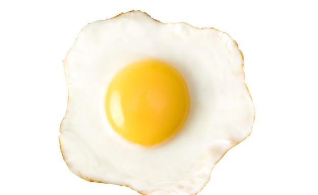 ביצה (צילום: Serghei Platanov, ShutterStock)