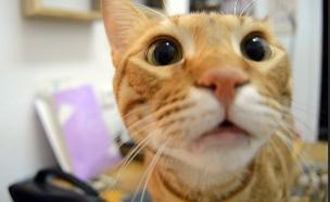 צפו: אפשר לאלף חתולים? (צילום: חדשות)