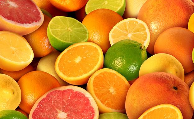 פירות הדר  (צילום:  Lightspring, shutterstock)