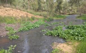 הצפה בנחל שקמה (צילום: איגוד ערים אשקלון, חדשות)