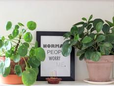 7 צמחים שלא תצליחו להרוג כל כך בקלות