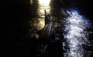 עיר הוצפה: תנינים ונחשים ברחובות (צילום: פייסבוק, חדשות)